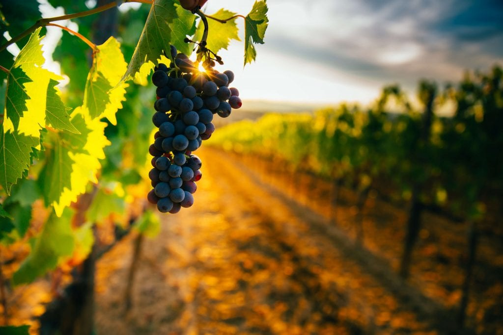 Agricultural Property Relief for vineyards